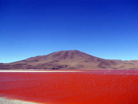 Chermette.Bolivie.Laguna_Colorada