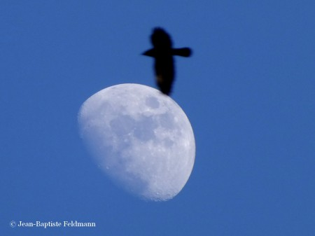 lune-gibbeuse