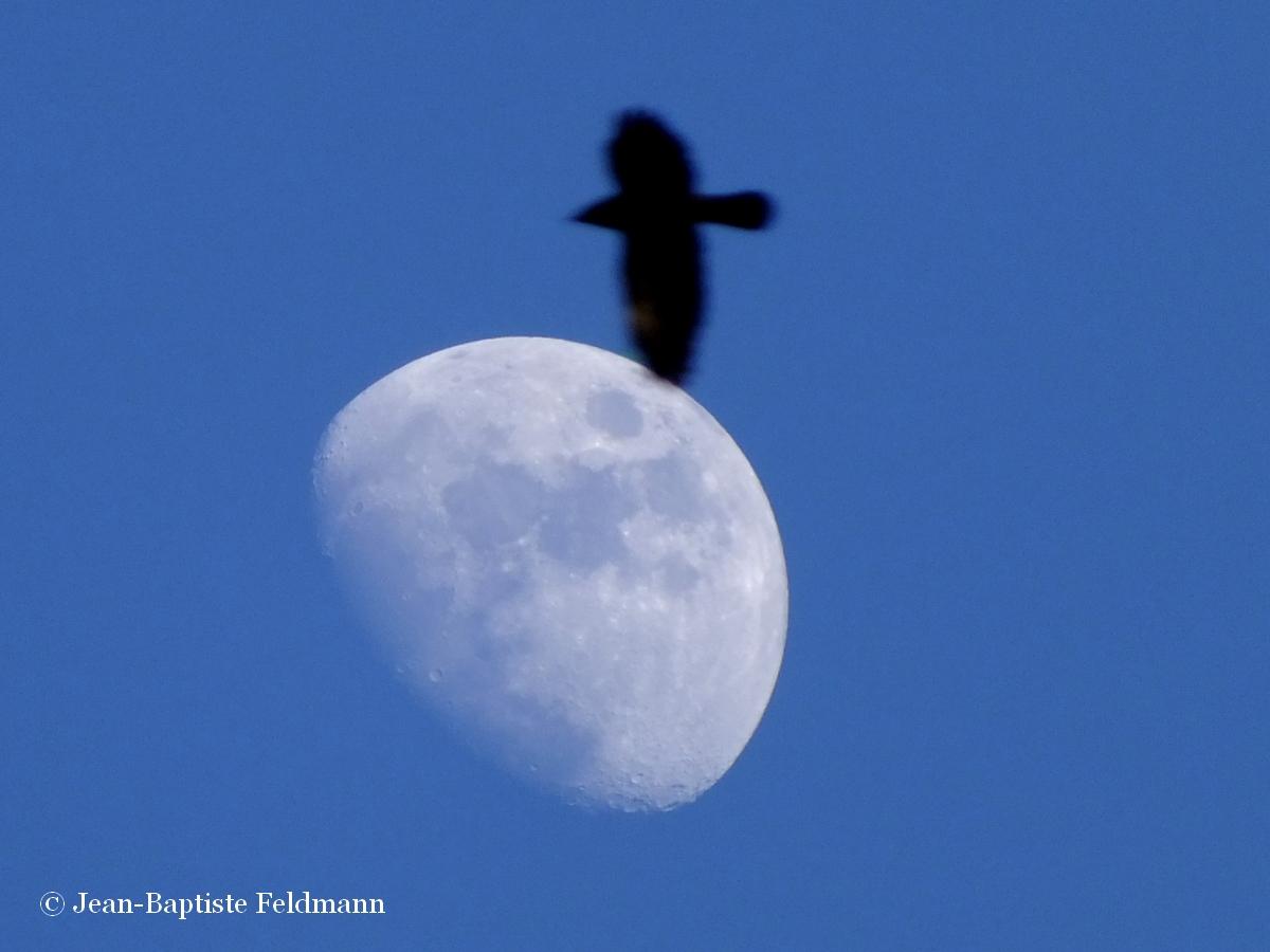 Pleine lune 2016 - Lune montante et descendante ...