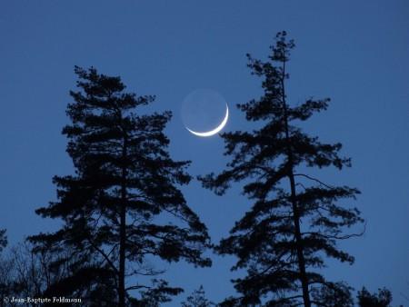 croissant_lune2
