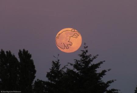 lapin_lune