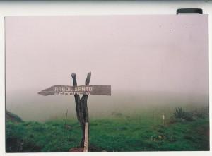 La grande modestie de la signalisation du Garoé ou l'Arbre Saint en 1991 allait bien avec l'atmosphère virgilienne des hauteurs brumeuses de l'île. © A. Gioda, IRD.