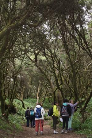 30/04/2016. En mission botanique dans la forêt de nuages. Llania, El Hierro. Cliché : M. Tapiau, IRD.