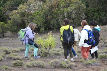 30/04/2016. En mission botanique sur les hautes terres humides et brumeuses. El Hierro. Cliché : M. Tapiau, IRD.