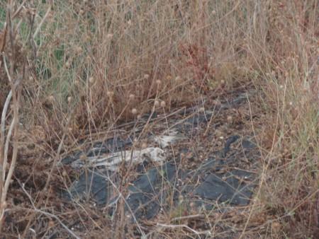 """Au milieu des herbes sèches, asphalte abandonné in situ d'une rue proche de chaussée du faux Pont-Neuf, toutes construites pour le décor du film """"Les Amants du Pont-Neuf"""". Le Domaine de la Tartuguière, biotope hostile à la cistude. Lansargues, Hérault, Conservatoire du Littoral. ©A. Gioda, IRD."""