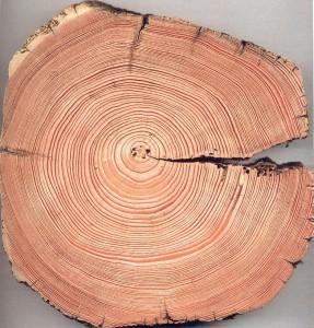 Les cernes des arbres sont les cercles concentriques que l'on observe dans un tronc copé. Ils sont dus à la croissance annuelle de l'aubier, et permettent de déterminer l'âge de l'arbre. Par ailleurs, les caractéristiques des cernes donnent des indications sur les conditions climatiques au moment de leur formation.