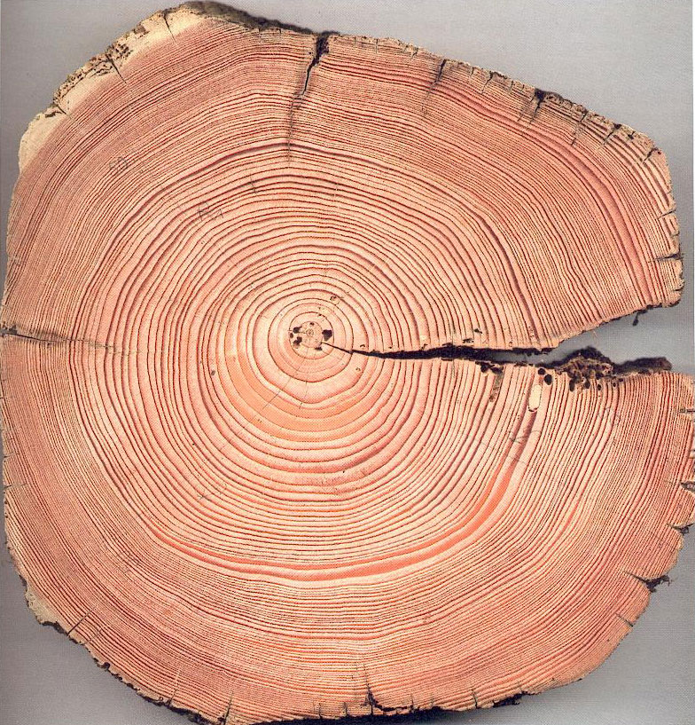 Le royaume magn tique du soleil par jean pierre luminet - Reconnaitre les arbres par leur tronc ...