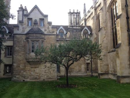 Le rejeton de pommier du Trinity College de Cambridge, planté sous la fenêtre de l'appartement de Newton