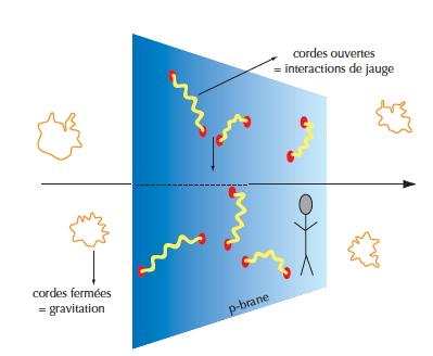 """Dans la théorie des cordes, les cordes fermées, dont certains modes de vibration décrivent la gravitation, se déplacent dans les neuf dimensions de l'espace fondamental (la Matrice). Au contraire, les extrémités des cordes ouvertes, qui décrivent les autres particules et interactions, ne se déplacent que sur une """"brane"""" (par exemple notre espace-temps 4D)."""