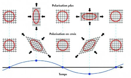 """La nature quadripolaire des ondes gravitationnelles. La figure montre l'effet d'une onde gravitationnelle parvenant perpendiculairement au plan d'un anneau de particules test. Selon la relativité générale, les ondes gravitationnelles peuvent adopter deux motifs particuliers, ou états de polarisation. La polarisation du haut, dite """"plus"""", dilate et contracte alternativement l'anneau sans changer la direction de ses axes principaux ; la polarisation du bas, dite """"en croix"""", tourne de 45° les directions de compression et d'étirement."""