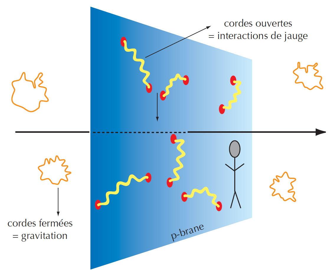 Les cordes fermées, dont certains modes de vibration décrivent la gravitation, se déplacent dans les neuf dimensions de l'espace fondamental. Au contraire, les extrémités des cordes ouvertes, qui décrivent les autres particules et interactions, ne se déplacent que sur la p-brane.